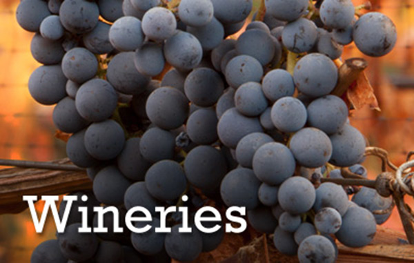 Wineries on Long Island