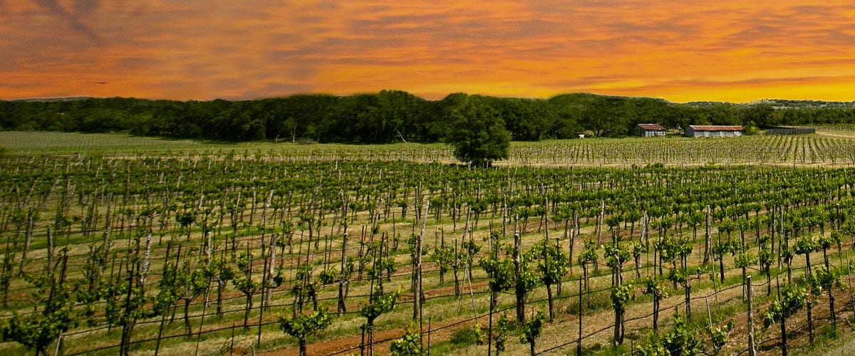 Long Island Wine Tasting Tours - Metro Limousine Service