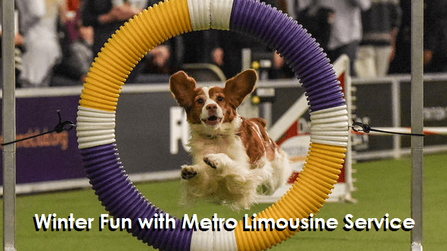 The Westminster Dog Show with Metro Limousine Service