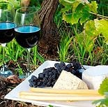 Vineyard Tours in Long Island with Metro Limousine & Party Bus Service